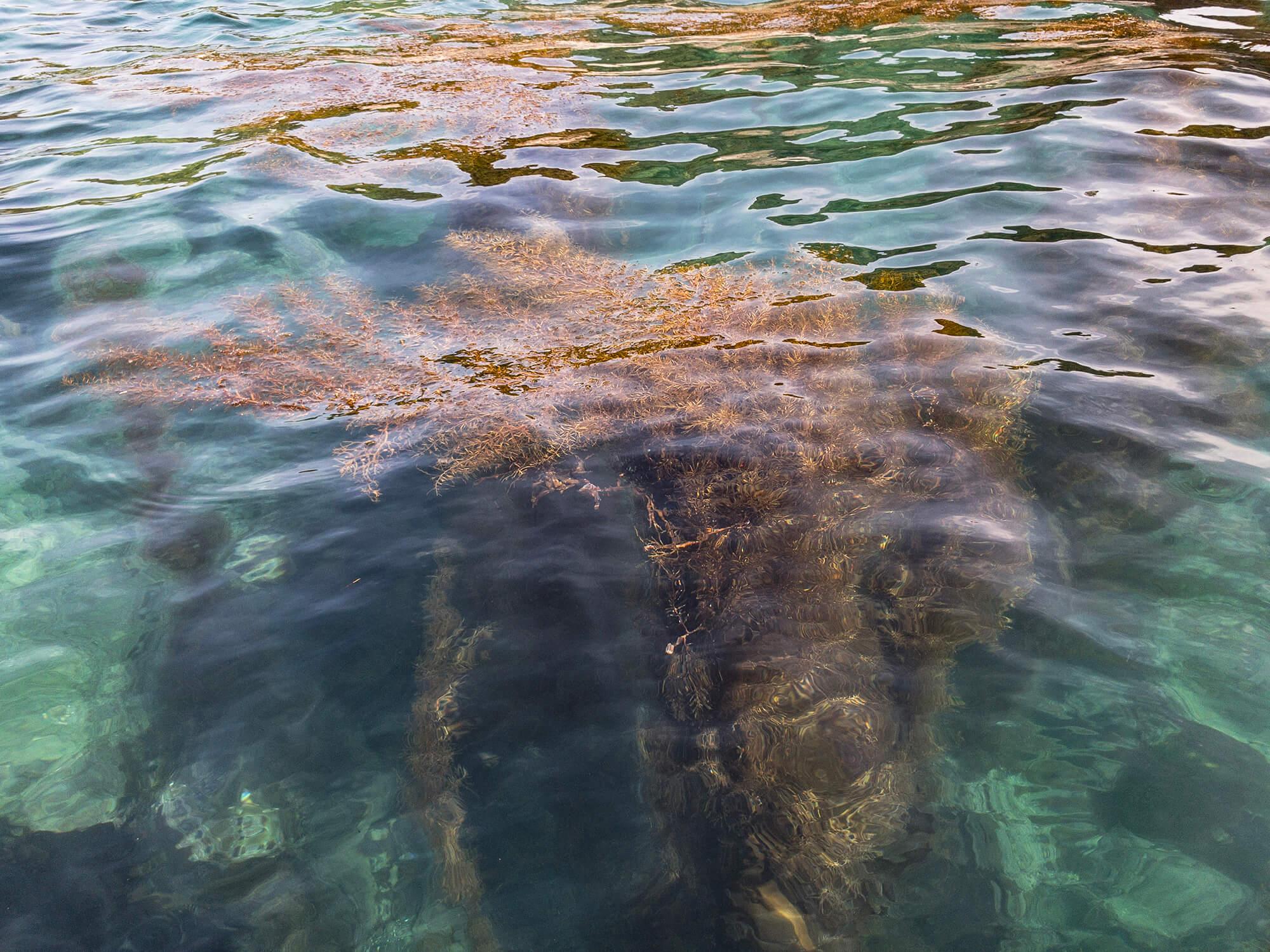 美になる海藻 | 紀州 あかもく | AKAMOKU